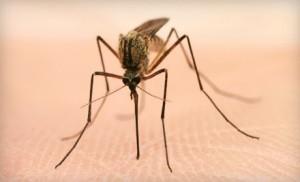 mosquito-squad-mosquito